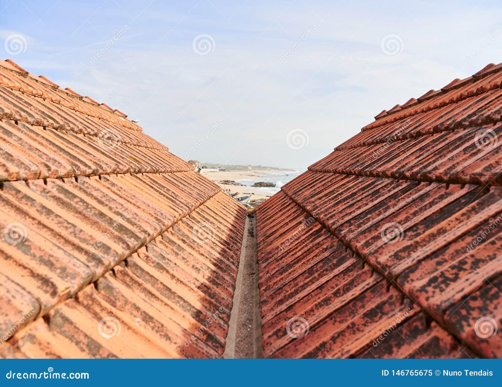 Widok między dachami