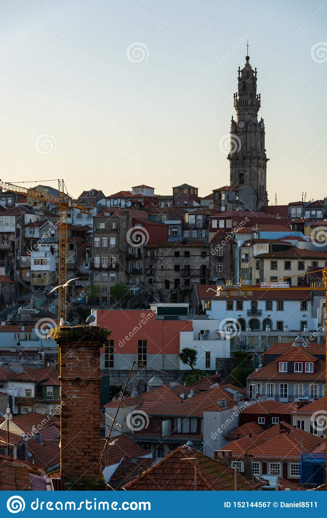 Widok miasto Porto i Clerigos górujemy Seagulls w przedpolu