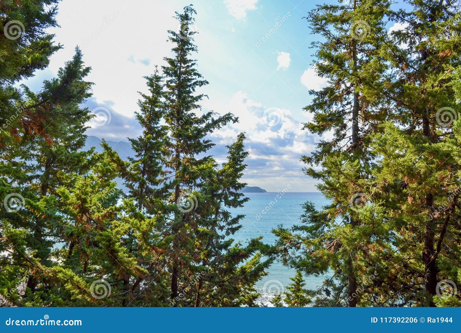 Widok morze od góry, dokąd sosny r Montenegro Budva Riviera Becici