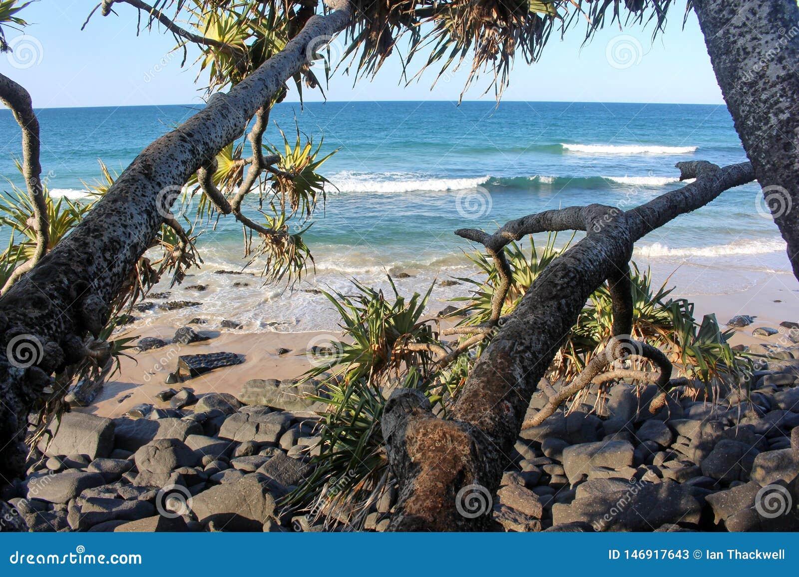 Widok na ocean pandanowiec palmy przy zmierzchem