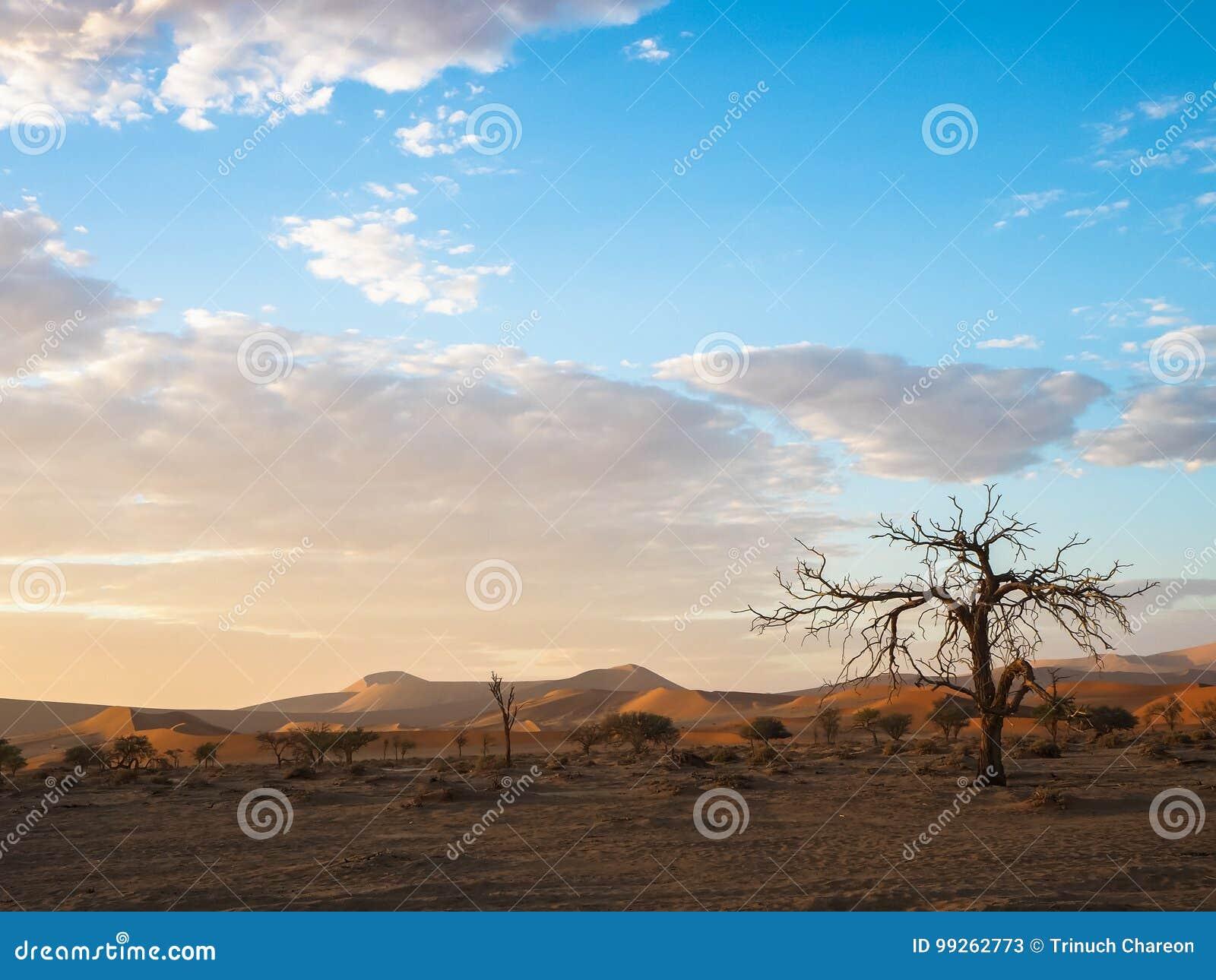 Widok pokojowy ranku wschód słońca z pięknym nieżywym drzewa, pustynia piaska diuny szerokim horyzontem z i chmurnieje