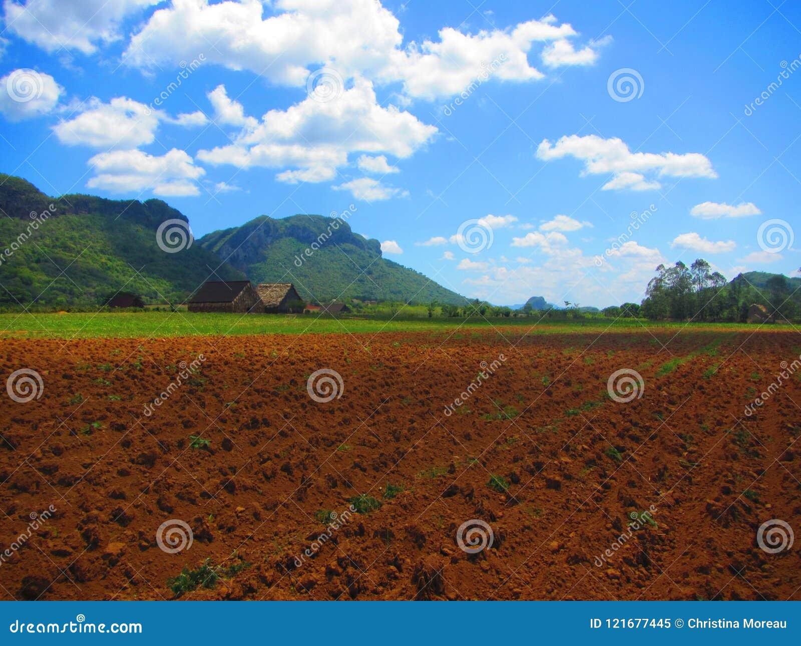 Widok vinales Kuba UNESCO dziedzictwa dolinny miejsce