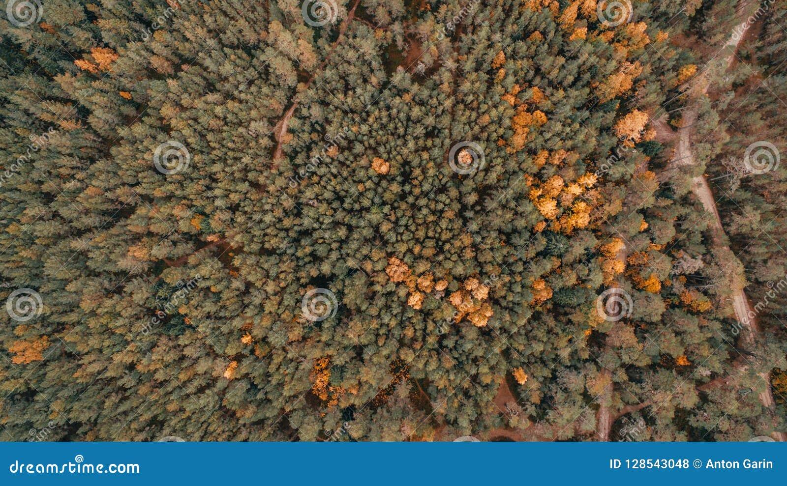 Widok z lotu ptaka gęsty las w jesieni z drogowym rozcięciem