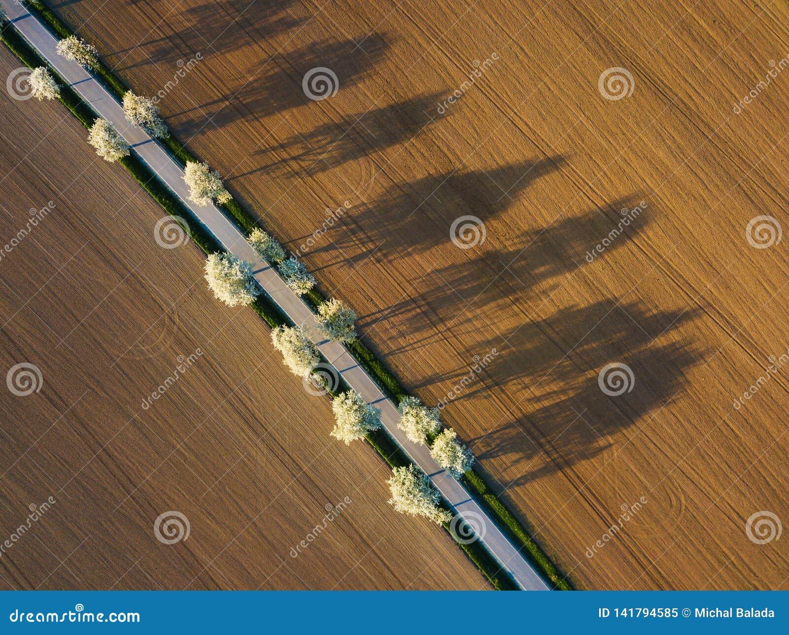 Widok z lotu ptaka jab?czany sad Piękna plenerowa wsi sceneria od trutnia widoku Dużo kwitnie jabłonie wokoło drogi