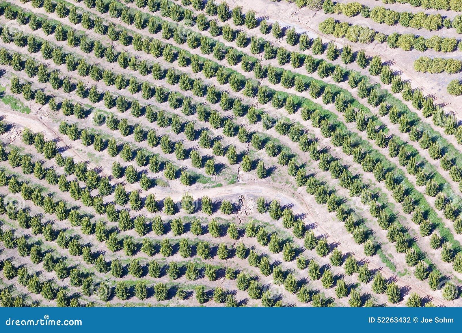 Widok z lotu ptaka pomarańczowy gaj w Ventura okręgu administracyjnym, Ojai, Kalifornia