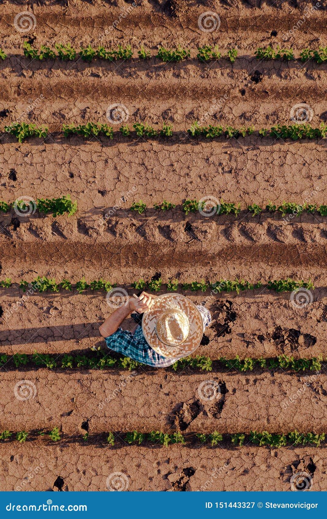 Widok z lotu ptaka rolnik w soi polu