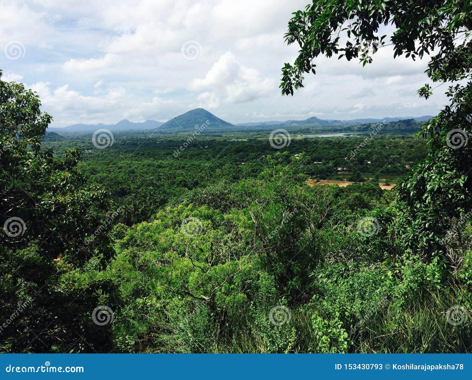Widok zielona piękna natura w dambulla Srilanka