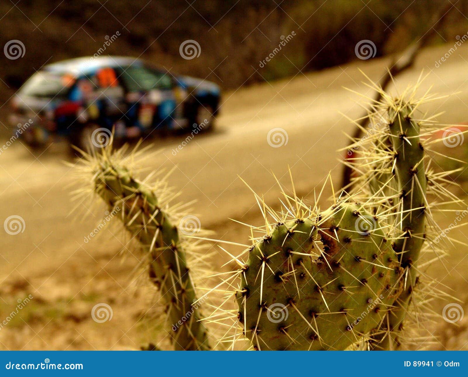 Wiec samochód pustyni