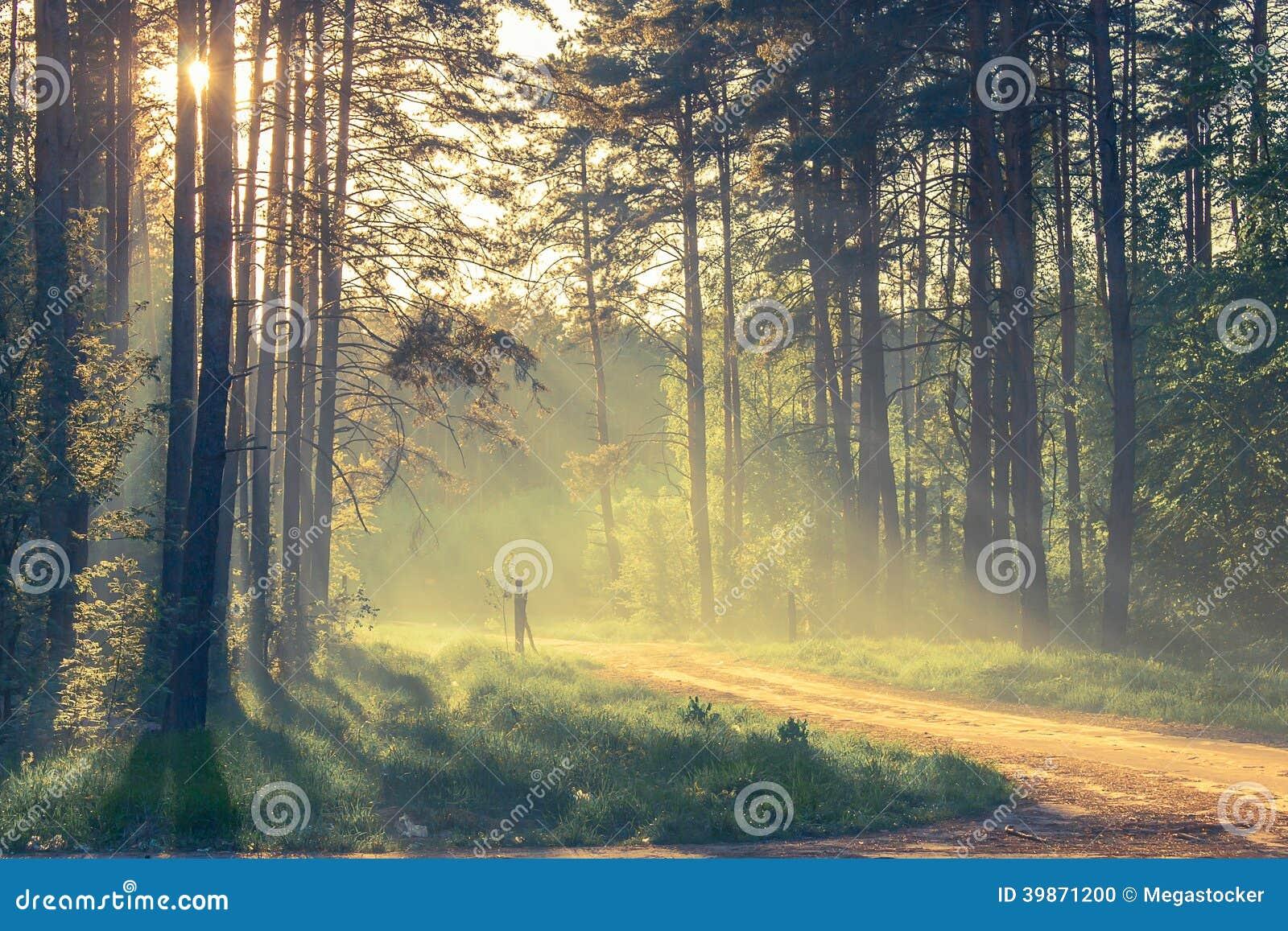 Wieczór las z słońcem i światłem
