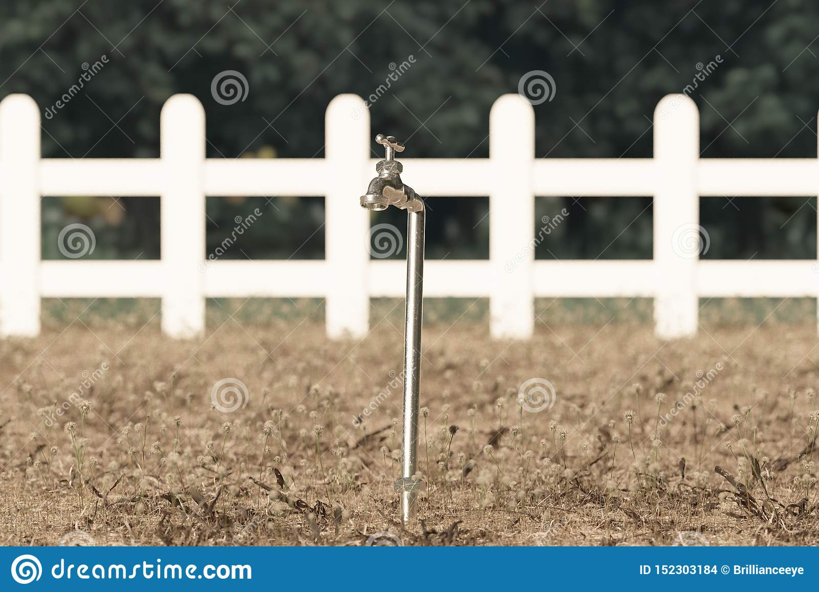 Wiedergabe 3d des Zapfens auf verwelktem Gras und Garten