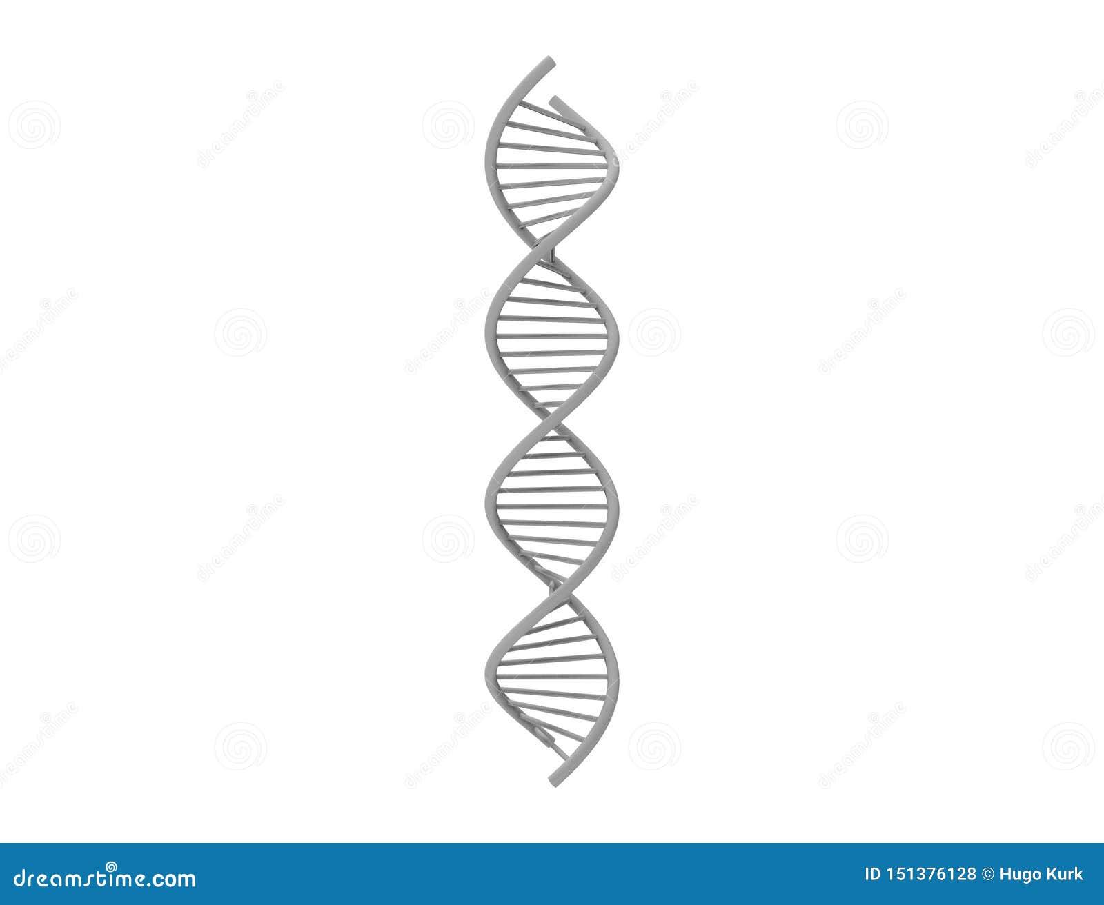 Wiedergabe 3d von DNA-Schnur lokalisiert im weißen Hintergrund