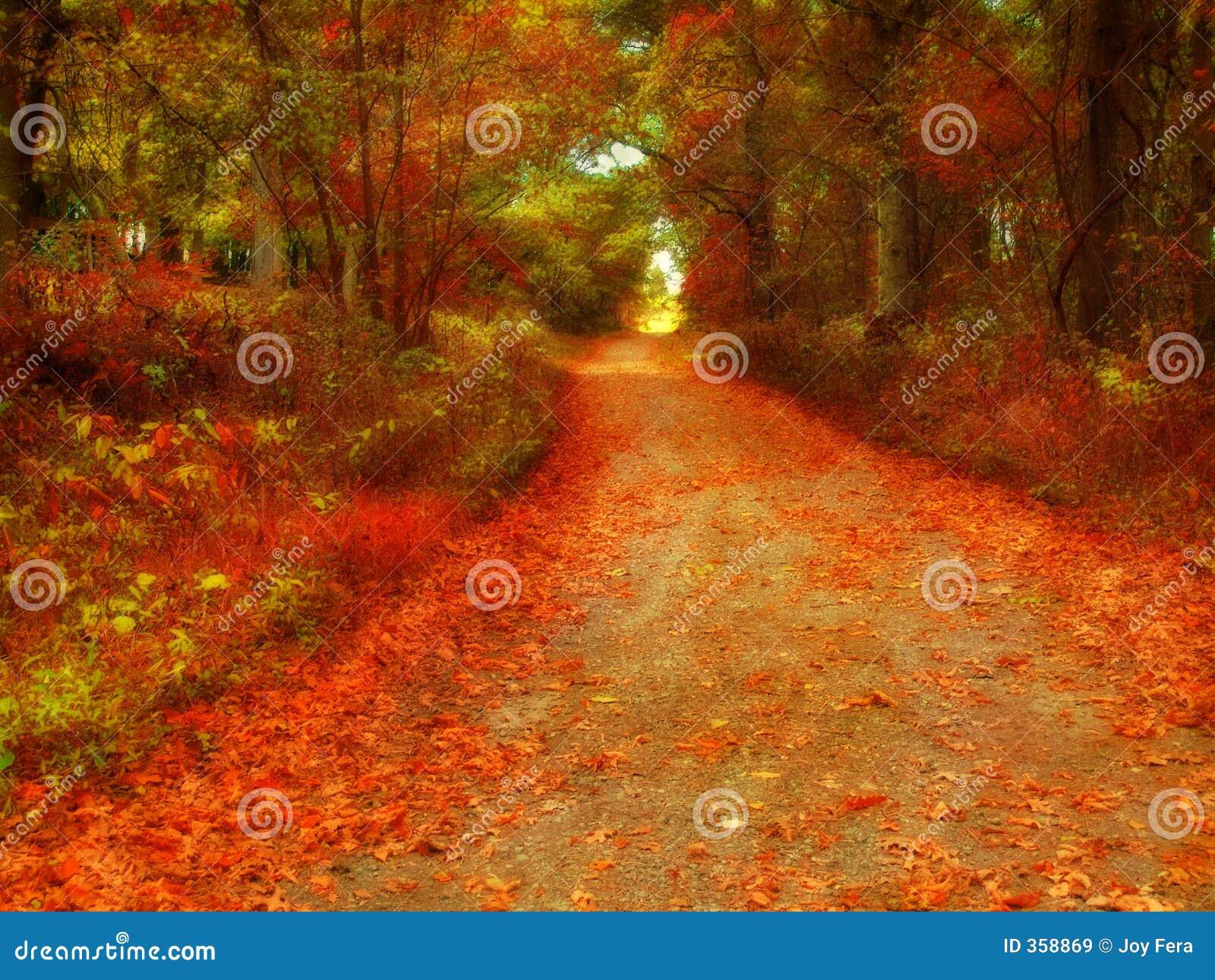 Wiejska droga jesieni