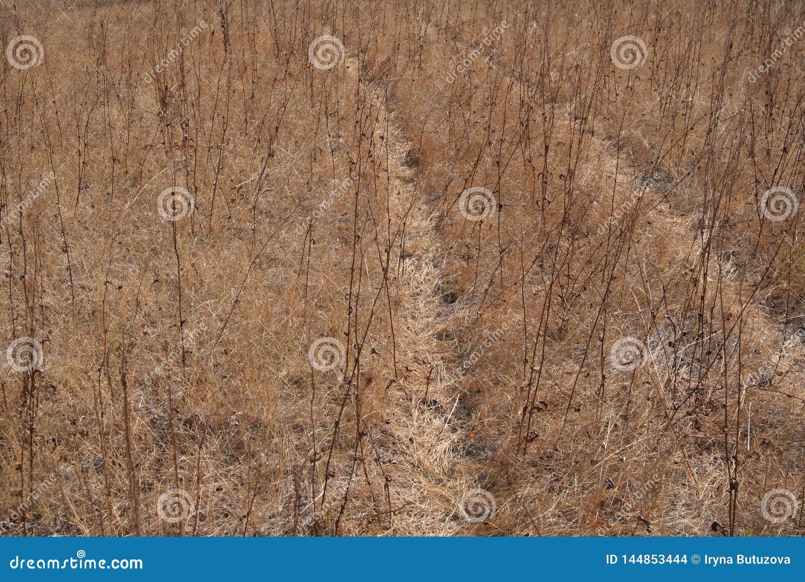 Wiejska droga przerastająca z trawą sucha trawa