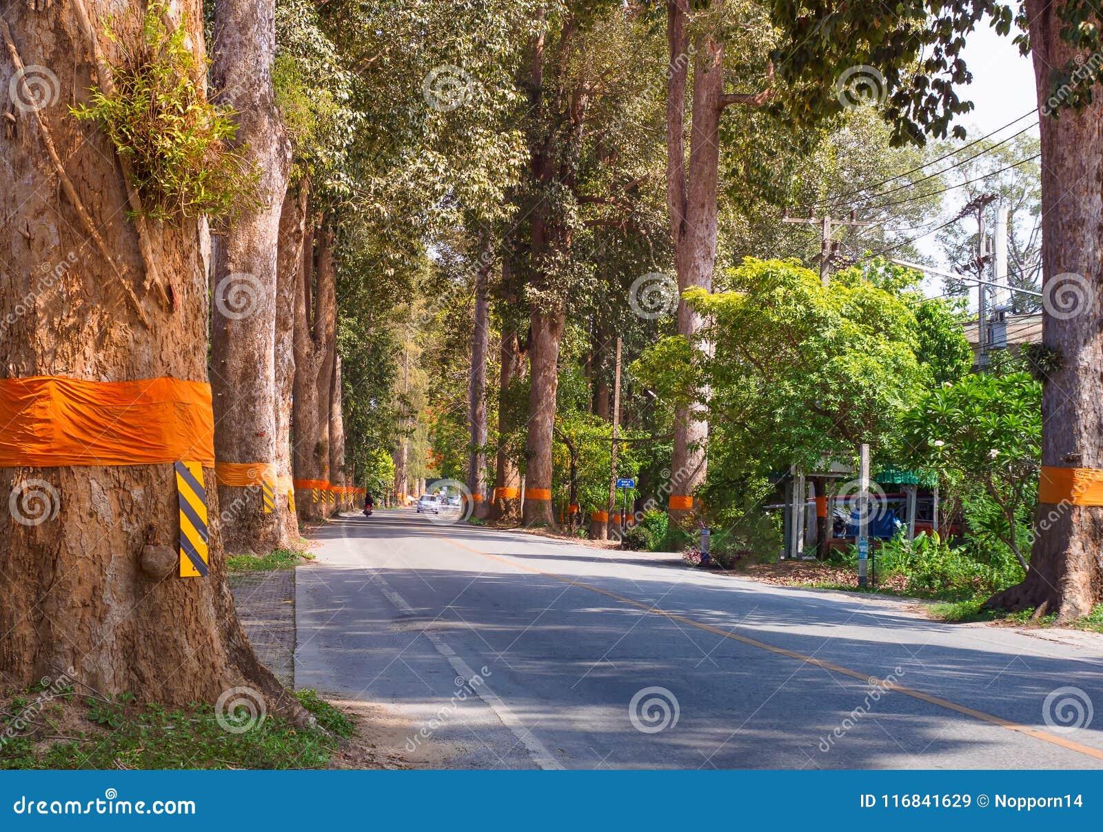 Wiejska droga tunel zieleni drzewa na świetle słonecznym z cieniem na ulicie w Amphoe Saraphi Chiang Mai mieście Tajlandia