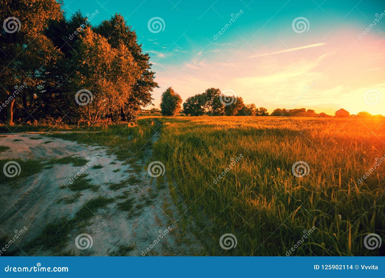 Wiejska droga wzdłuż pola przy zmierzchem