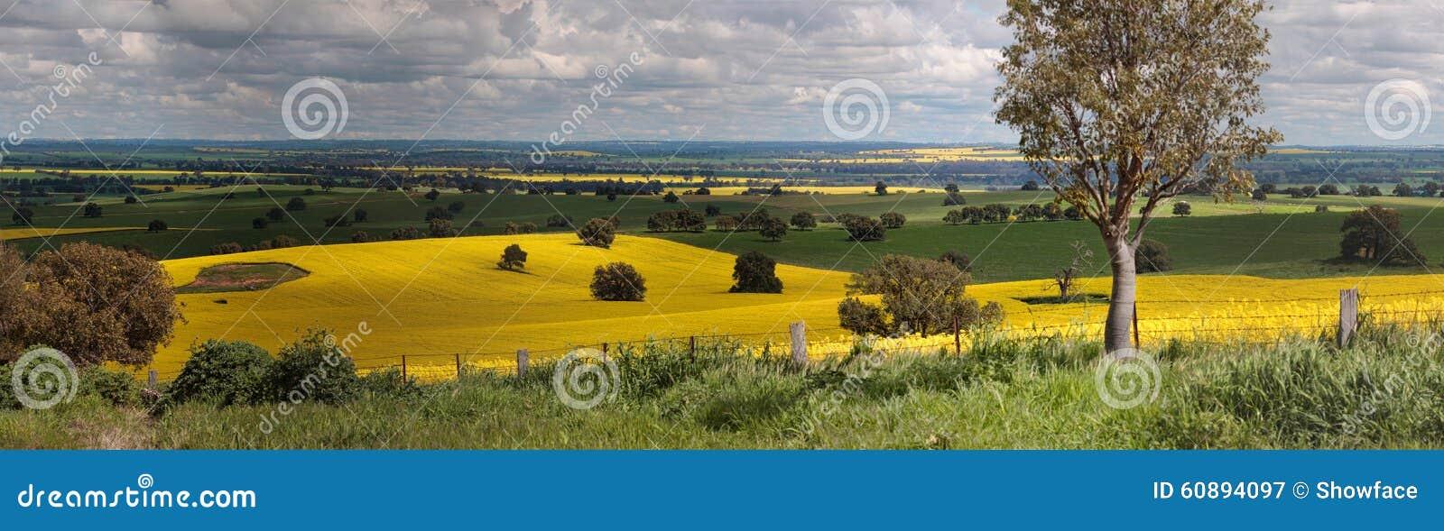 Wiejska ziemi uprawnej panorama