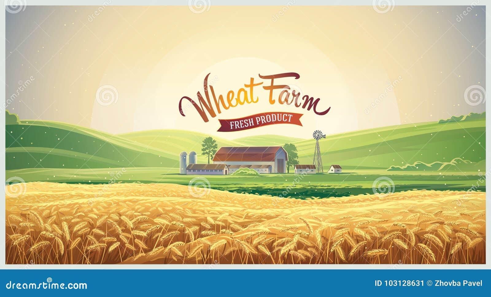 Wiejski krajobraz z pszenicznym polem