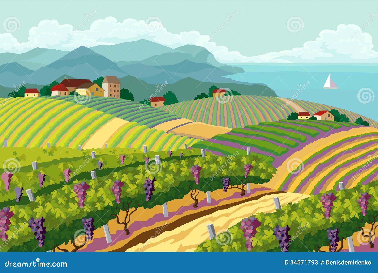 Wiejski krajobraz z winnicą