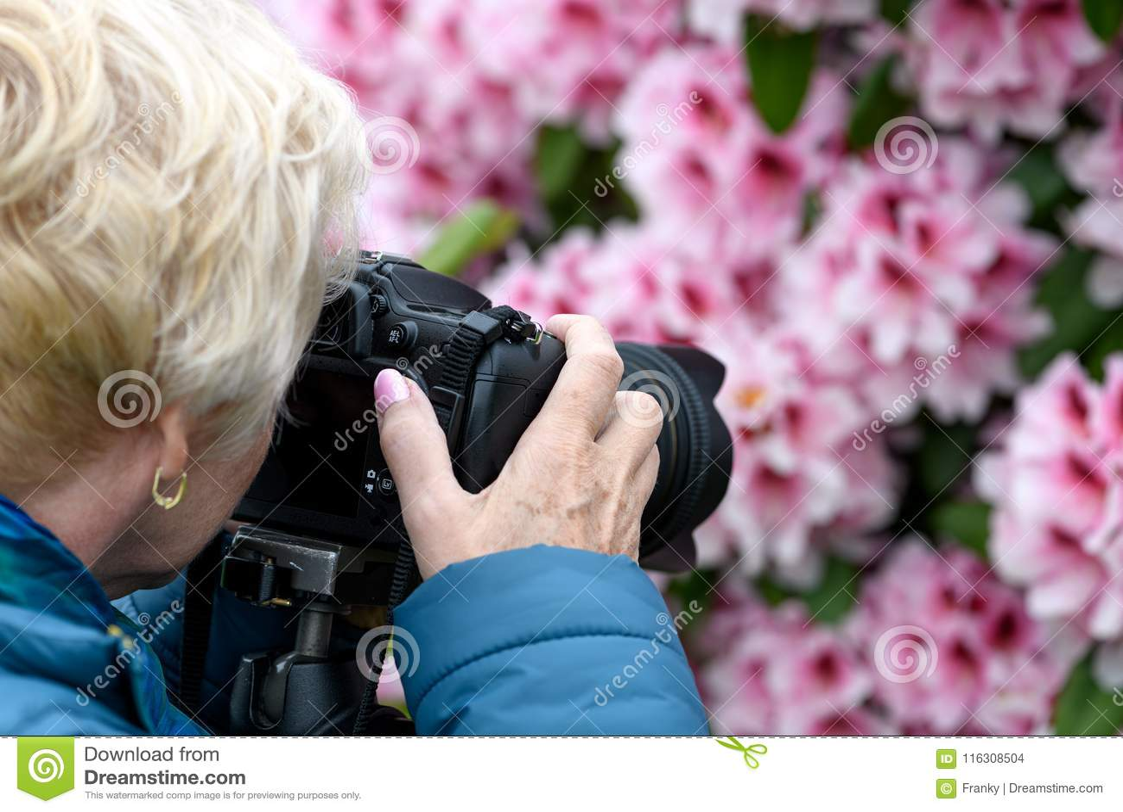 Wiek średni kobieta fotografuje kwitnących różaneczniki