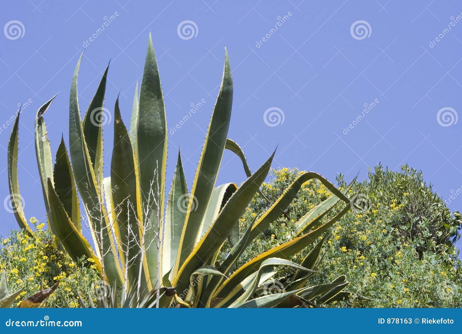 Wiek roślinnych