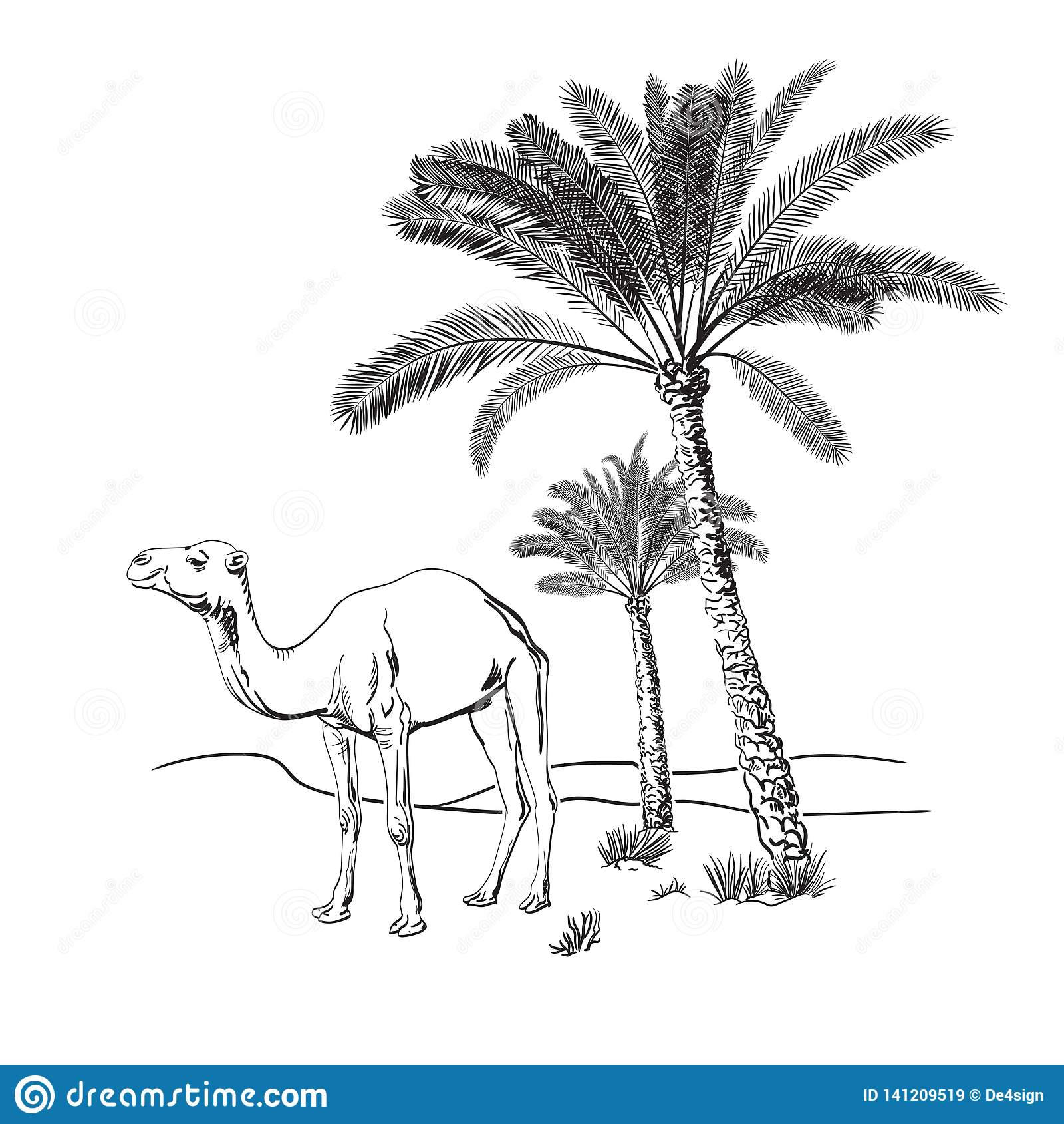 Wielbłąd i drzewka palmowe w pustyni Ręka rysująca wektorowa ilustracja nakreślenie