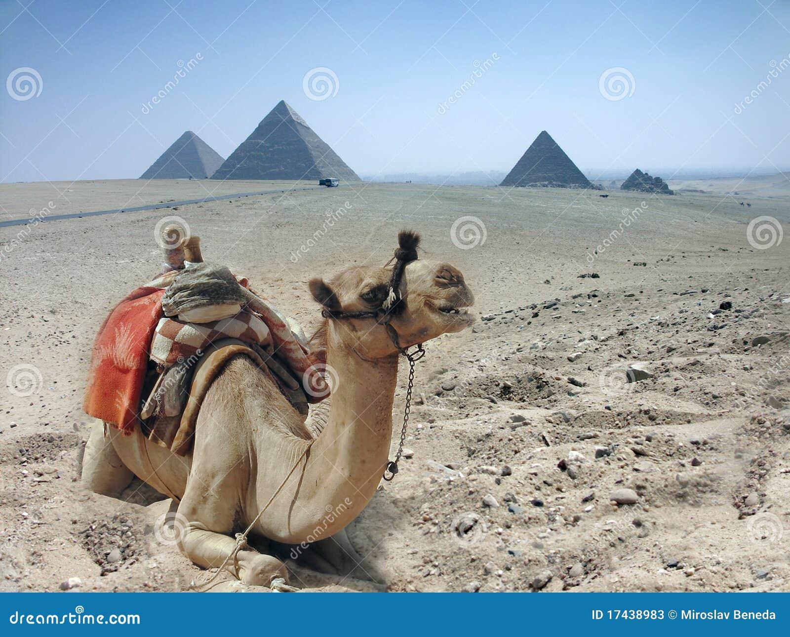 Wielbłądów Egypt ostrosłup