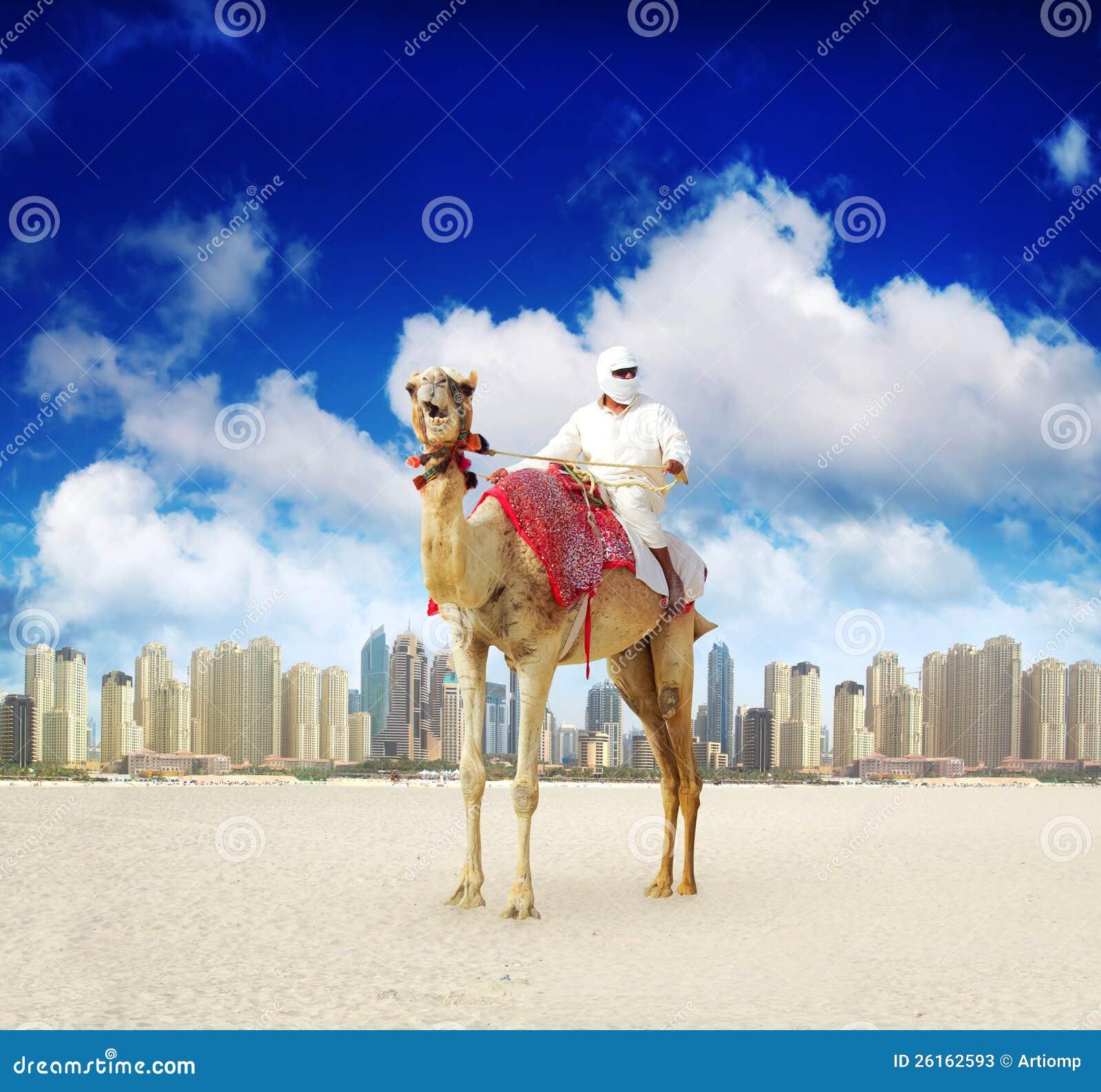 Wielbłąd na Dubaj Marina Plaży