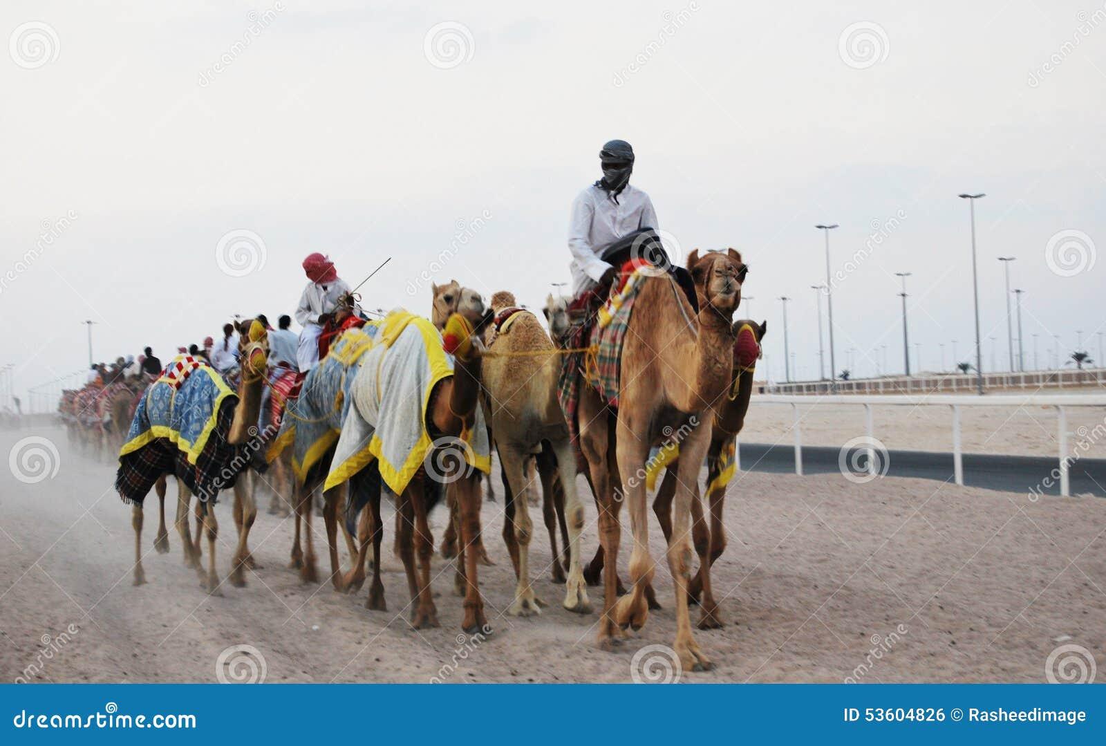 Wielbłąd rasa, Doha, Katar