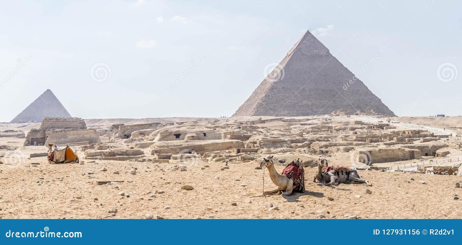 Wielbłądy na tle Giza ostrosłupa kompleks