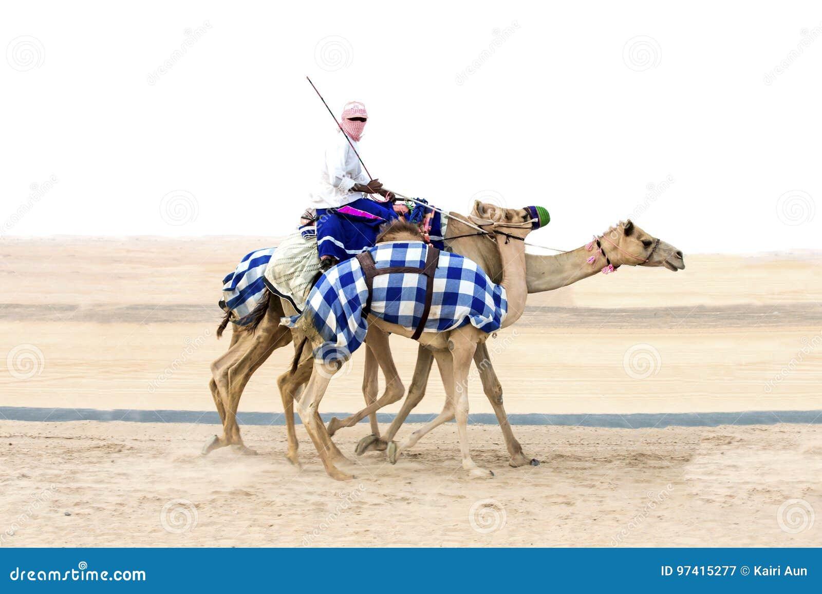 Wielbłądy w pocierania al Khali pustyni przy Pustą ćwiartką w Abu Dhabi,