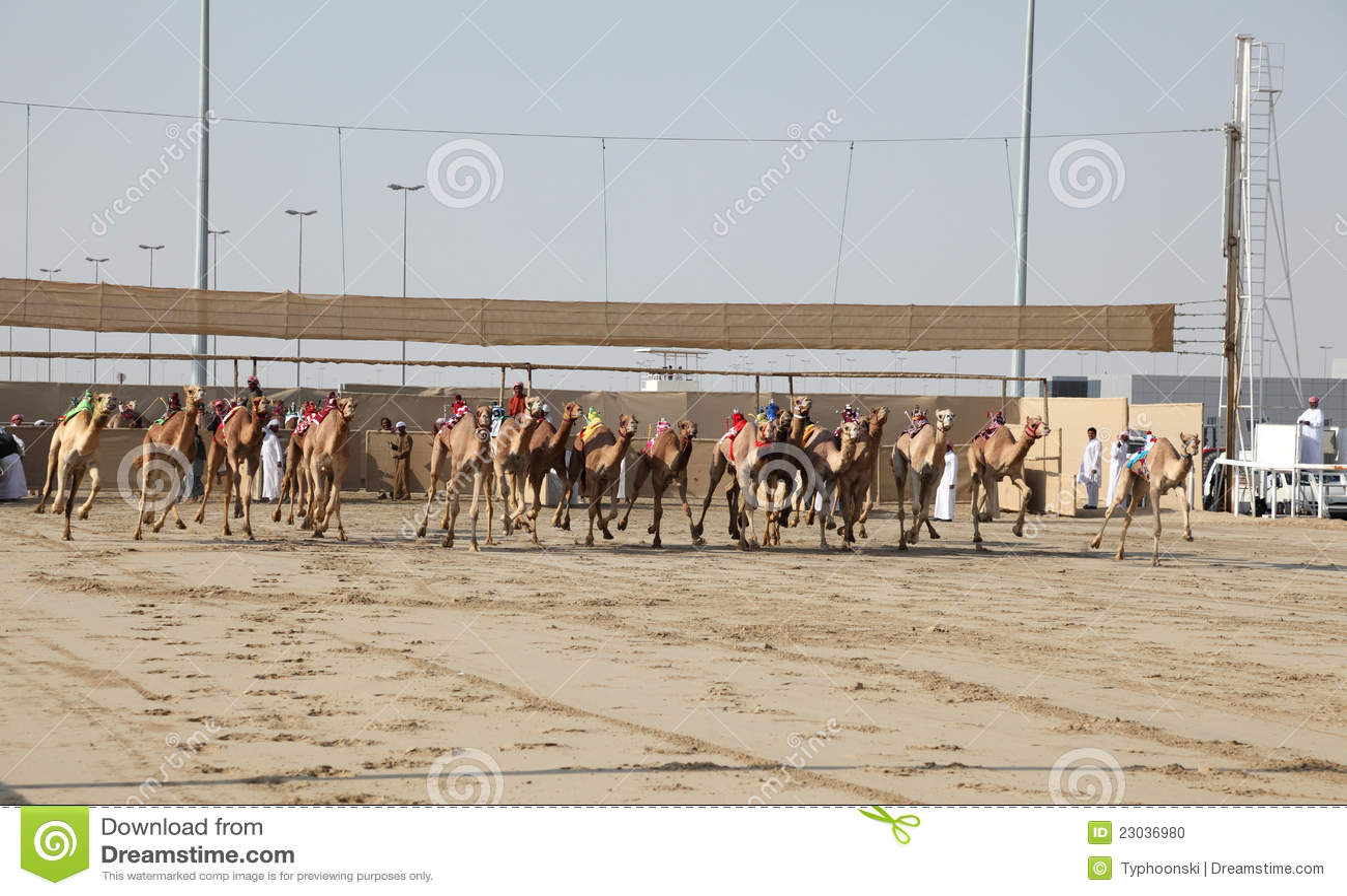 Wielbłądzi Doha Qatar rasy początek
