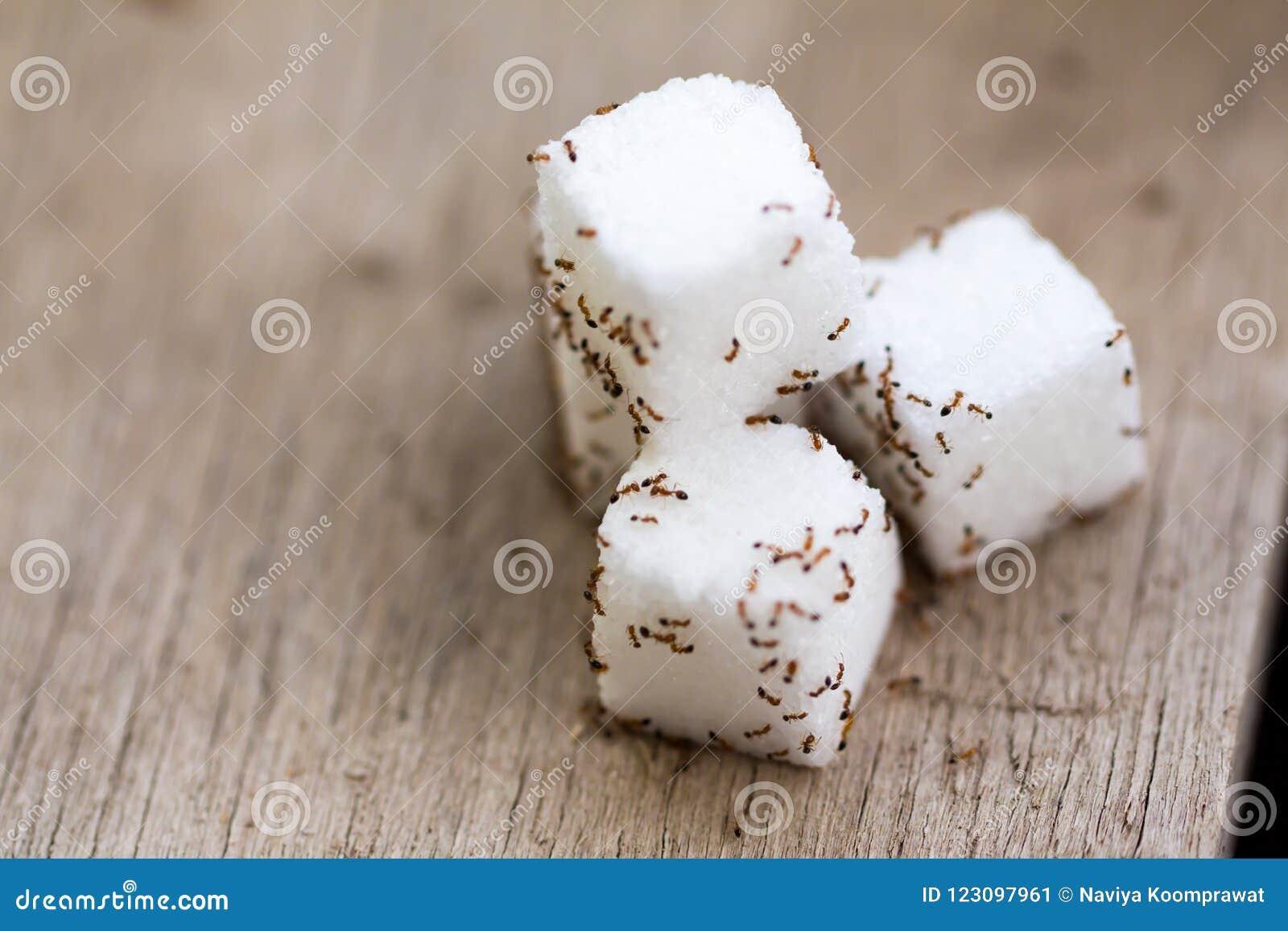 Wiele małe mrówki na sześcianu cukierze