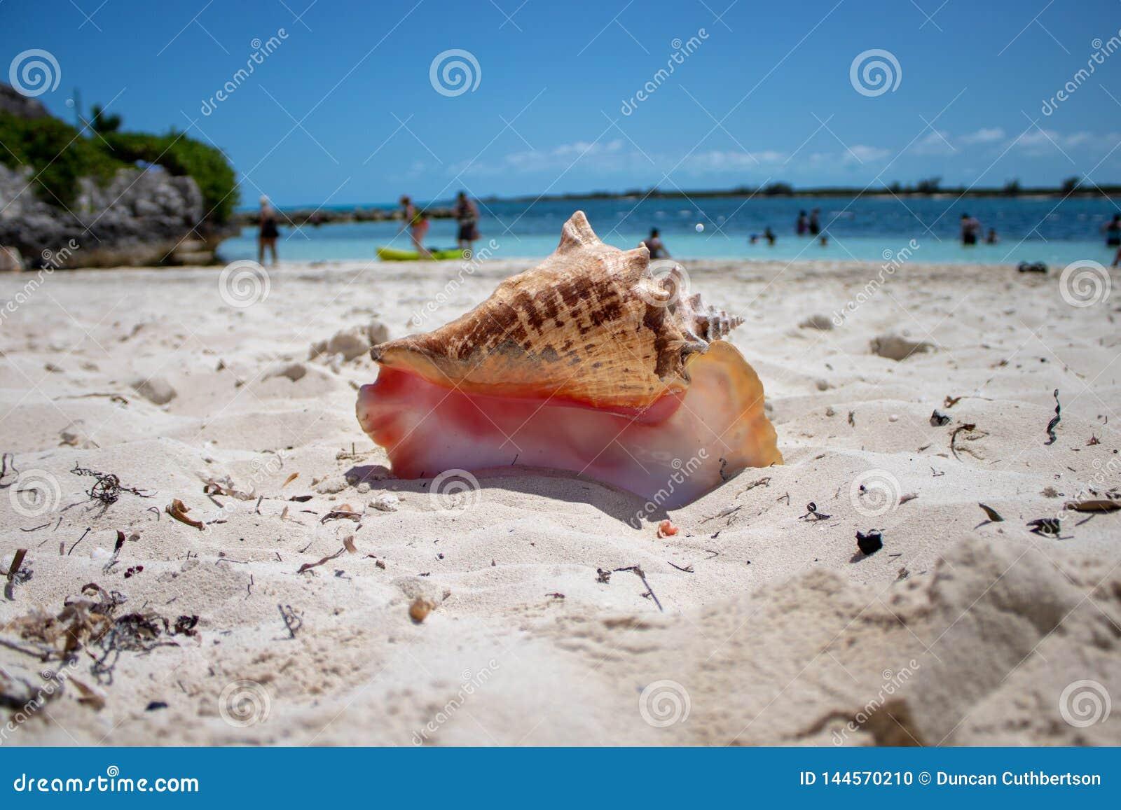 Wielka skorupa na tropikalnej plaży