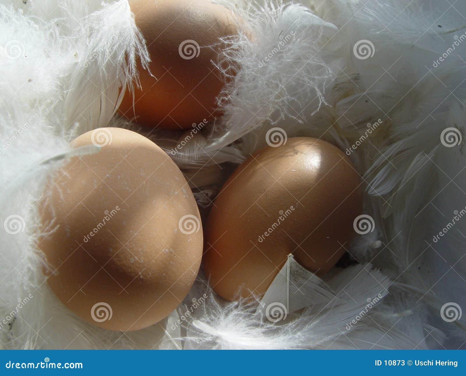 Wielkanoc szczęśliwy