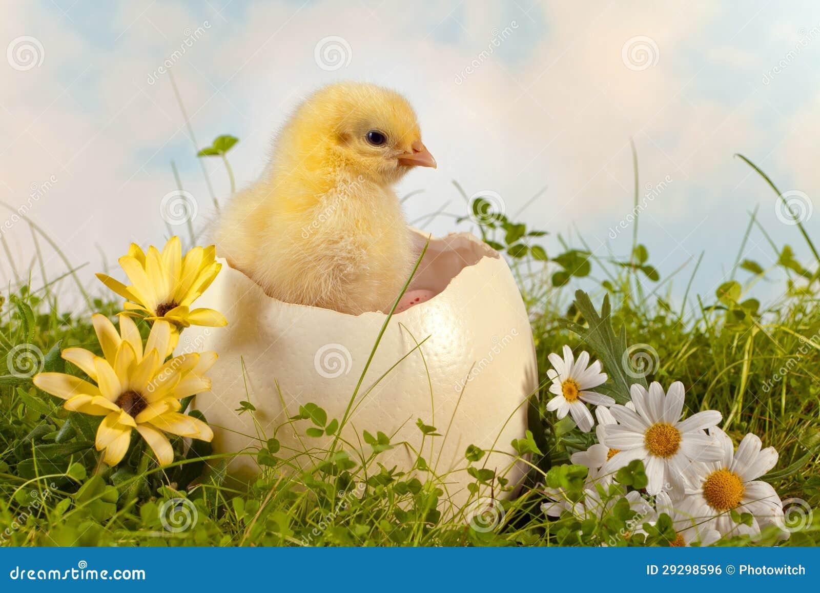 Wielkanocny kurczątko w ogródzie