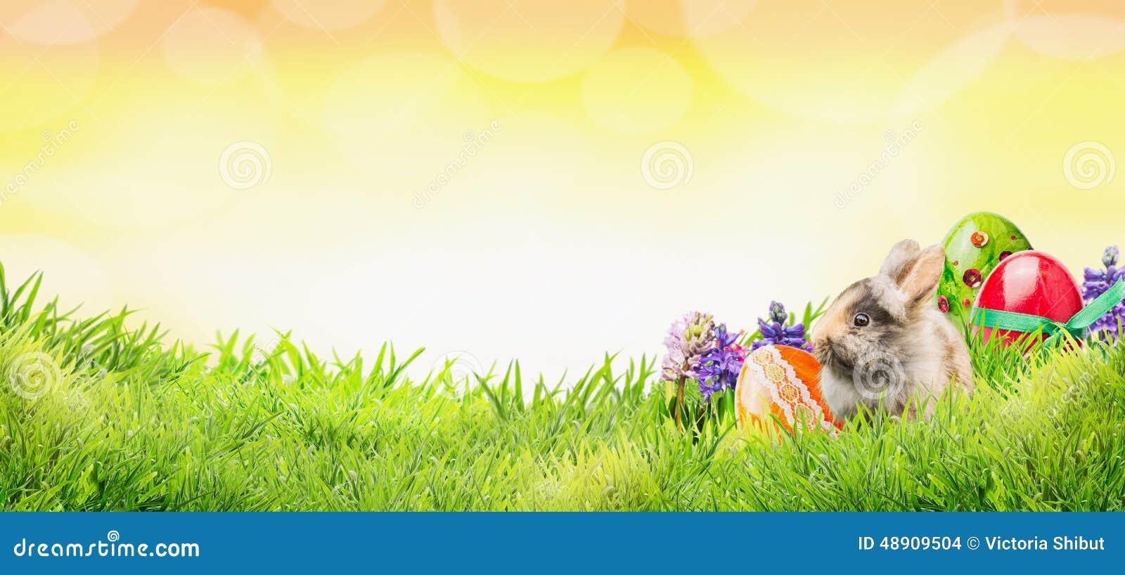 Wielkanocny tło z królikiem, jajkami i kwiatami na, trawie i pogodnym niebie z bokeh, sztandar
