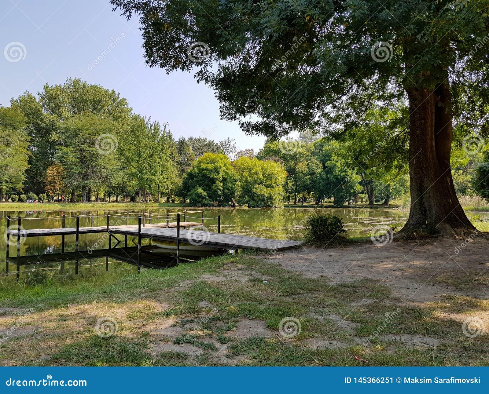 Wielki drzewo stroną jezioro na jasnym lato ranku