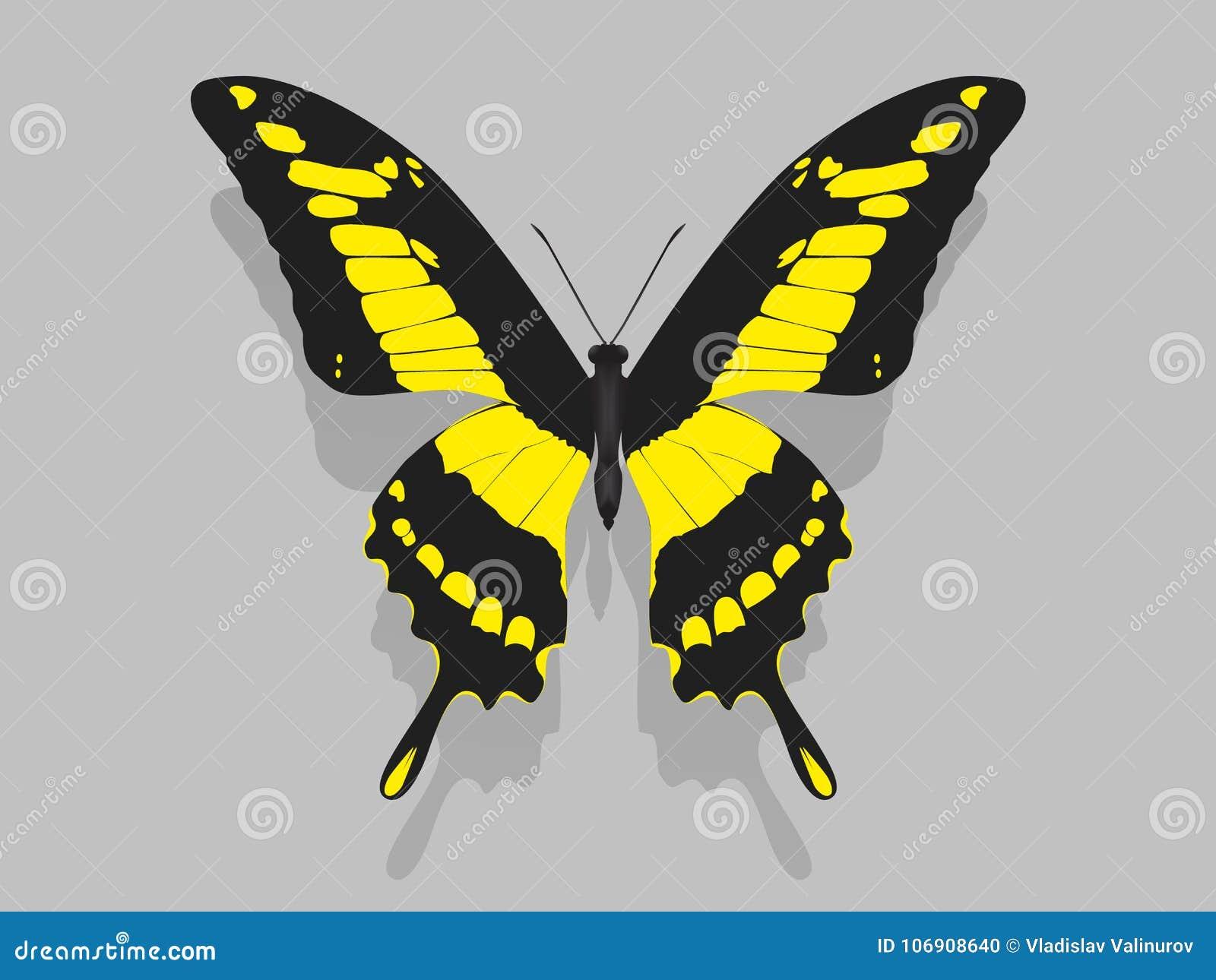 Wielki motyl z czernią uskrzydla, kolorów żółtych wzory