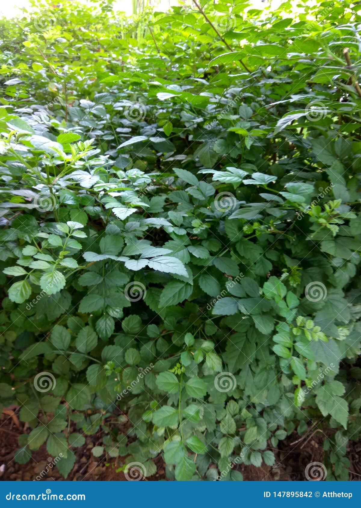 Wielki ziele? li?ci krajobraz przy parkiem