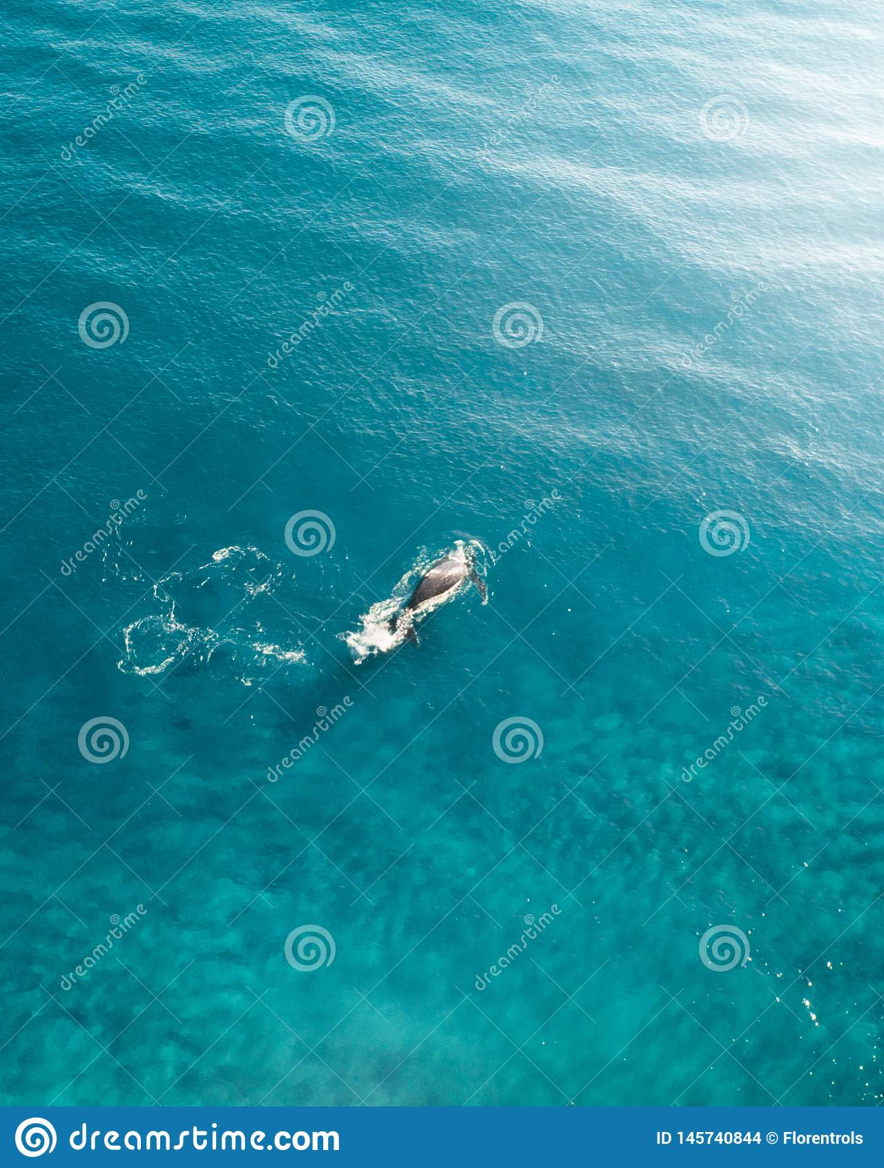 Wieloryb pływa statkiem w oceanie Antena strzał wieloryb narusza wierzchołek woda błękitny ocean