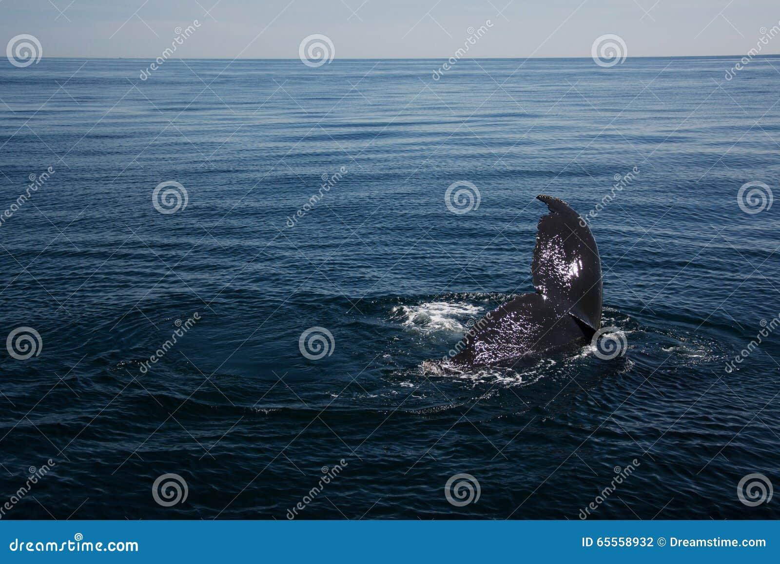 Wieloryb w morzu