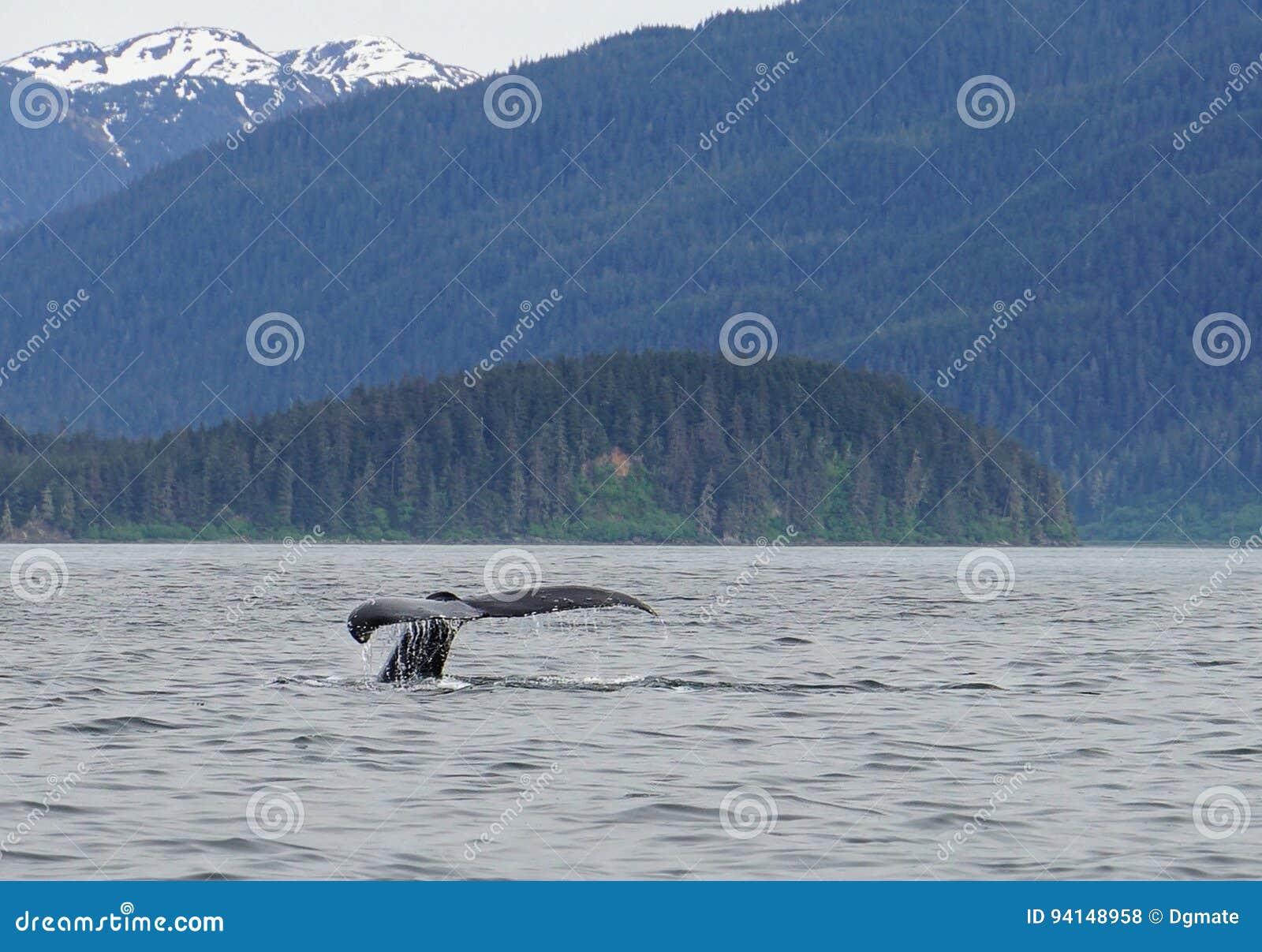Wielorybi dopatrywanie, humpback wieloryby w Alaska