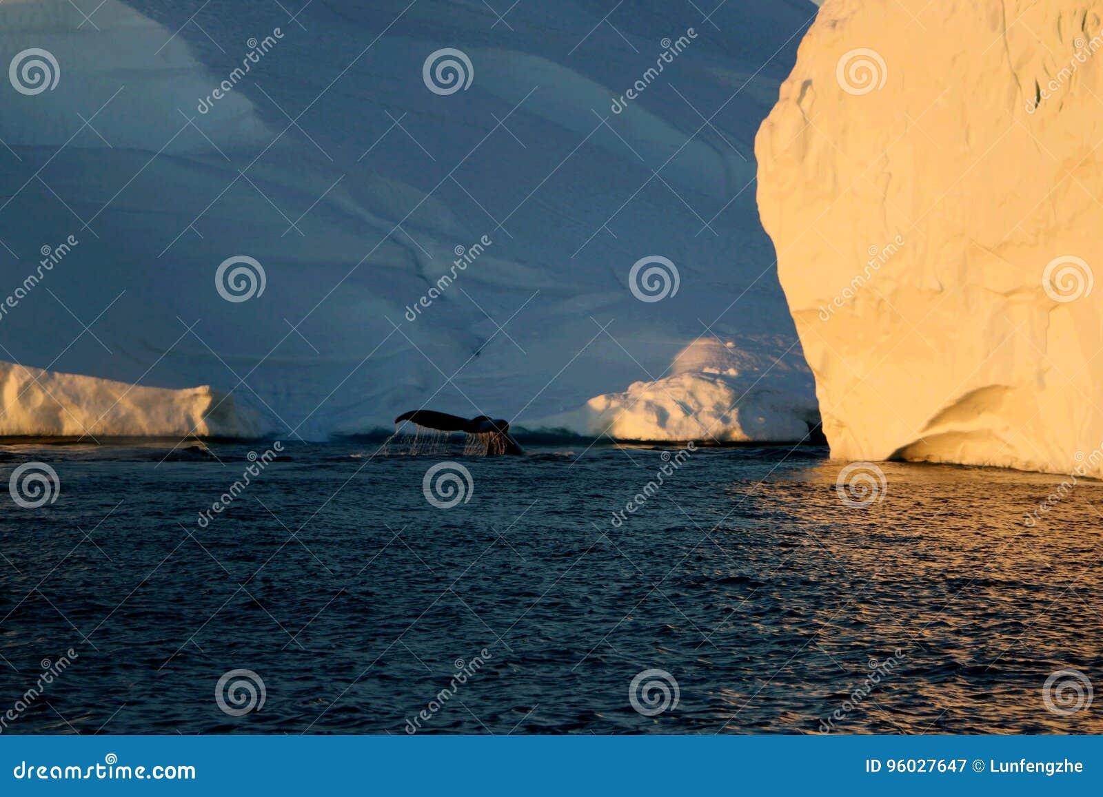Wielorybi dopatrywanie w Ilulissat północy