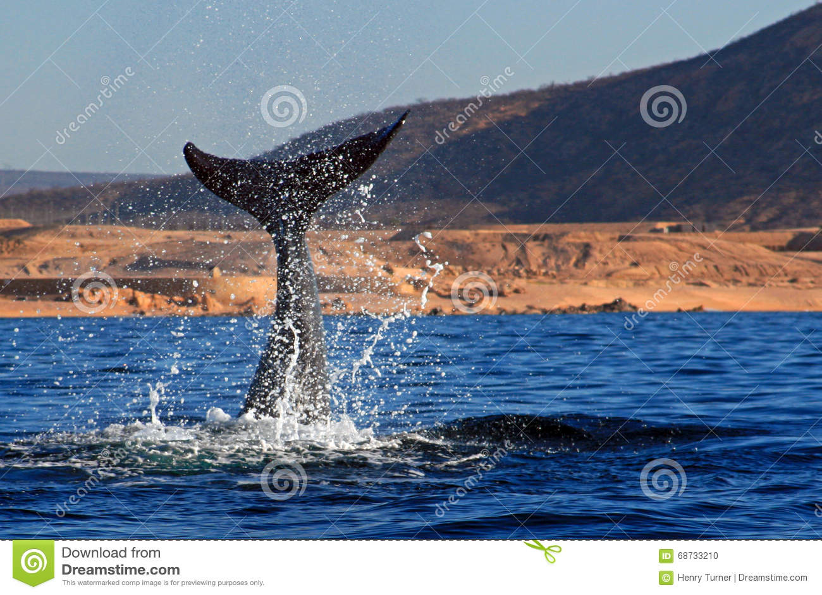 Wielorybi fuks z ocean kiścią w Cabo San Lucas Meksyk
