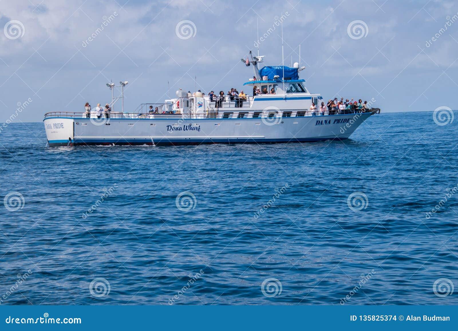 Wielorybia dopatrywanie łódź z turystami bierze obrazki delfiny przy nim jest łękiem