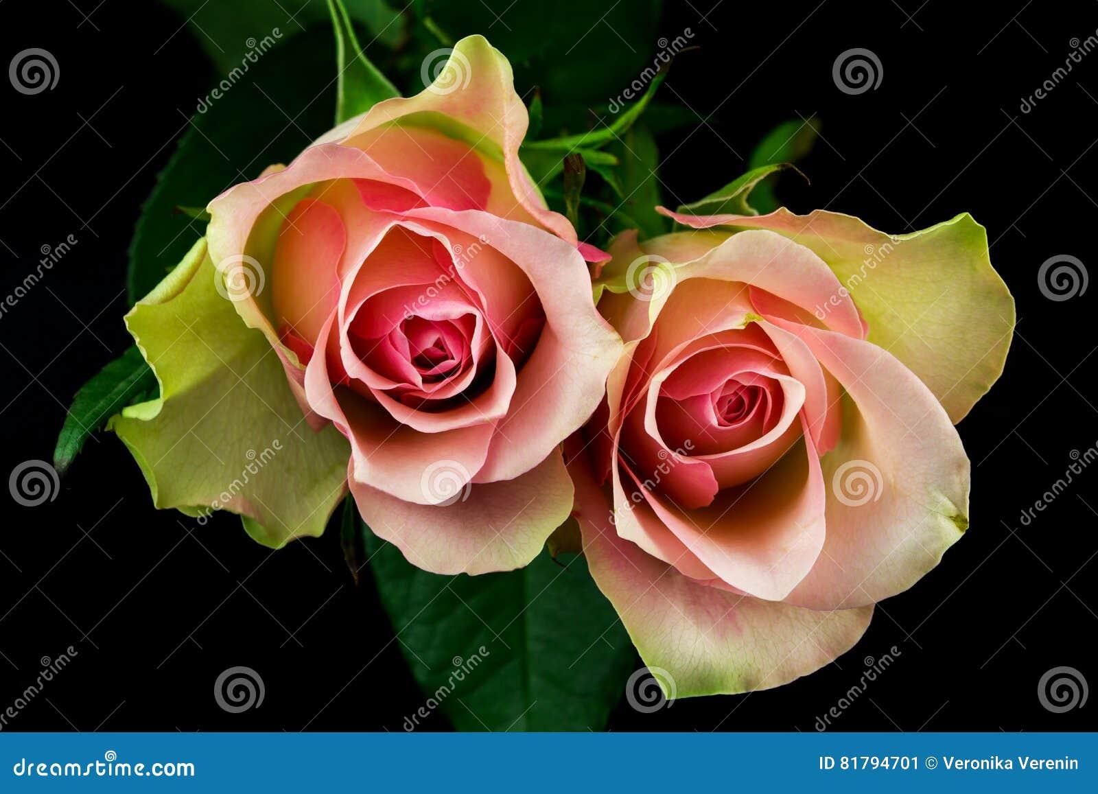 Wiersz Róże Obraz Stock Obraz Złożonej Z Menchie