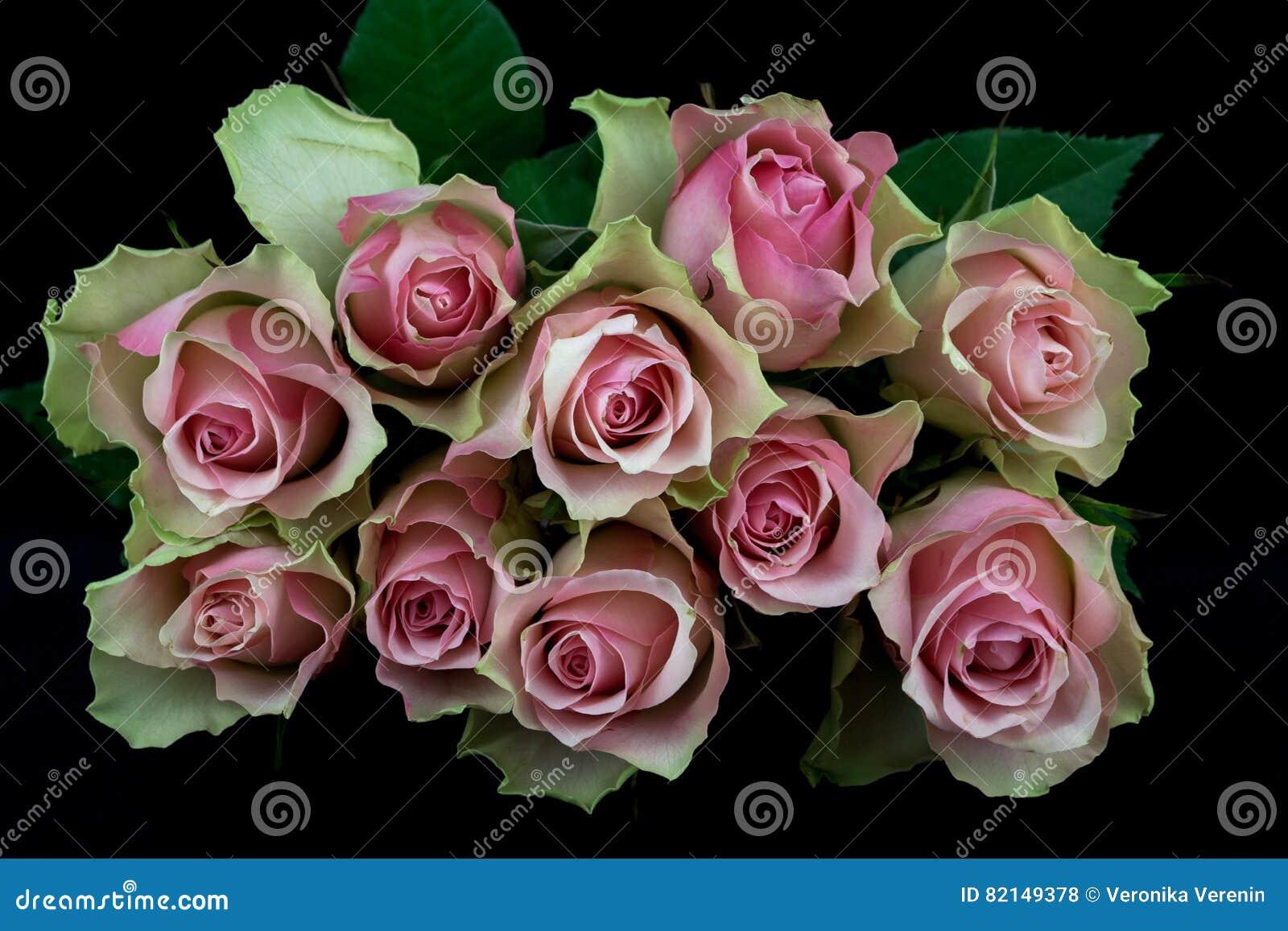 Wiersz Róże Zdjęcie Stock Obraz Złożonej Z Okwitnięcie