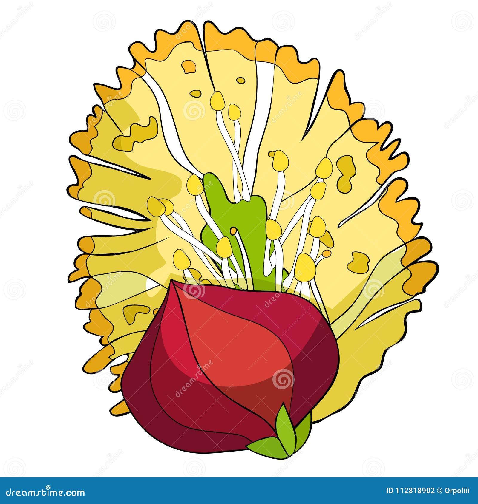 Wierzbowa żółta drzewna kwiat wiosna również zwrócić corel ilustracji wektora