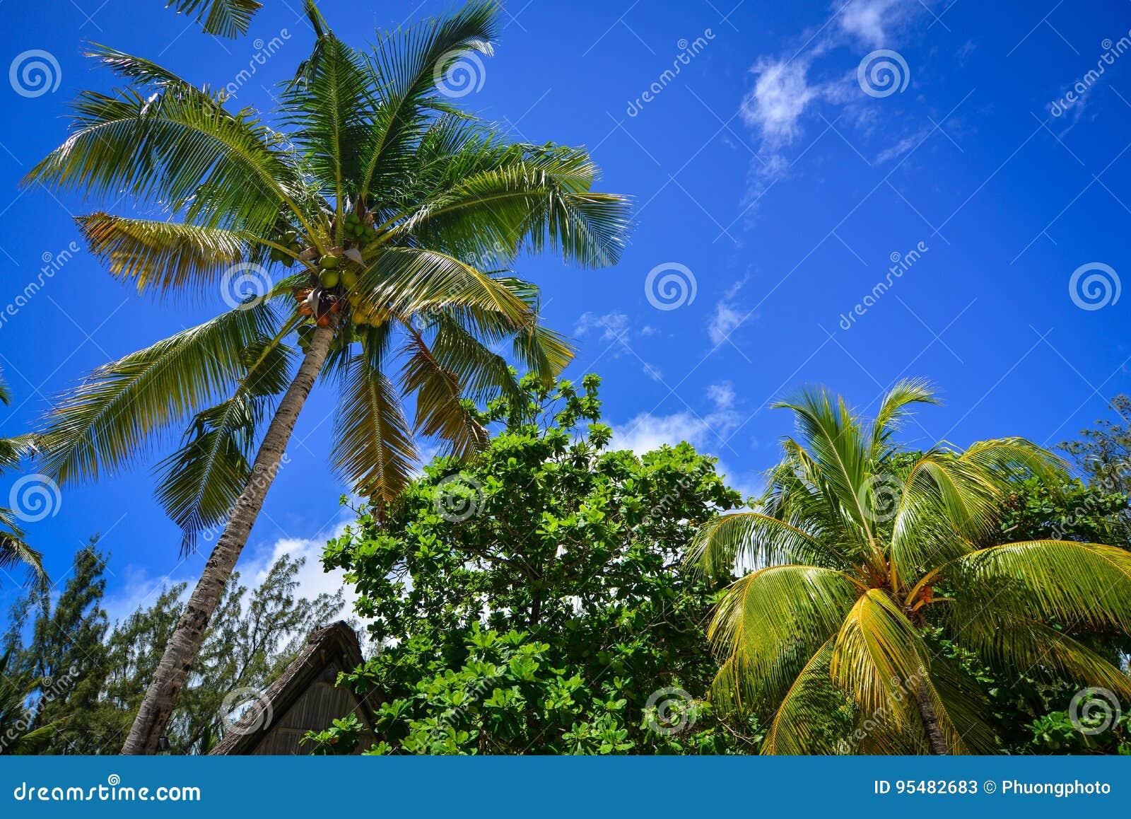 Wierzchołek drzewa przy lasem w słonecznym dniu
