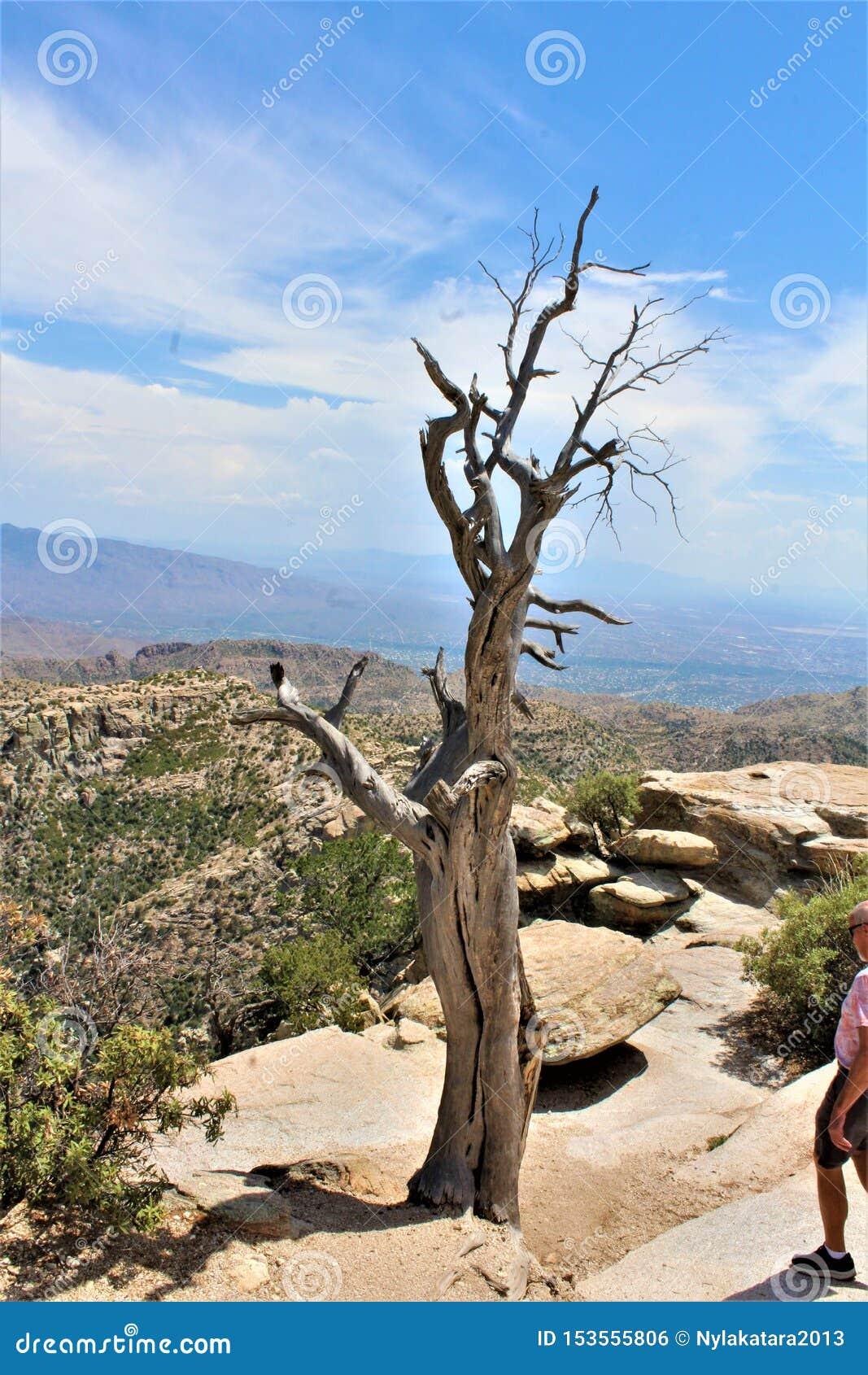 Wietrzny punkt Vista, góra Lemmon, Santa Catalina góry, Lincoln las państwowy, Tucson, Arizona, Stany Zjednoczone
